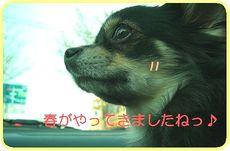 Hana_0317r_2