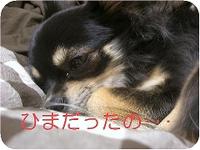 Hana_0324_3