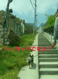Hana_0427