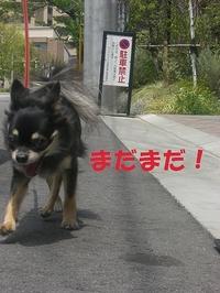 Hana_04271