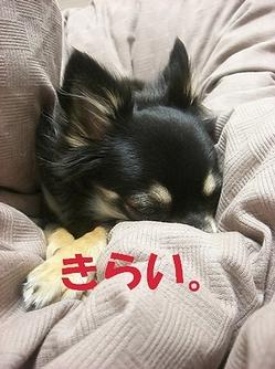 Hana_05101_2