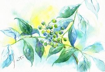 Blueberry_4