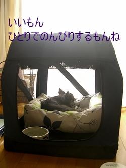 Hana0809162_2