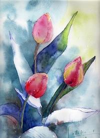 Tulip736_3