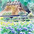 美山の紫陽花