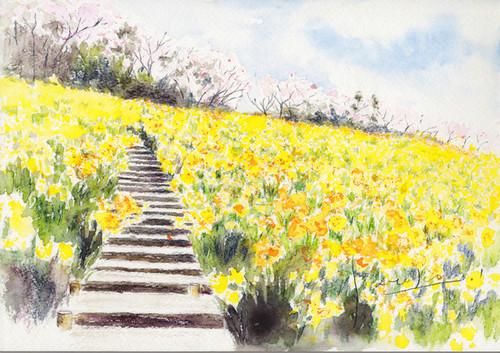 菜の花の咲く風景