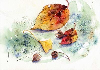 落ち葉と木の実