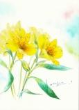 アルストロメリア 黄