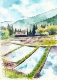 五箇山の水田風景