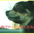 Hana_0317