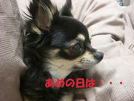Hana_0510