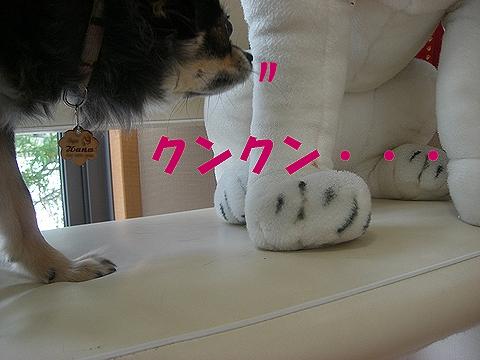 Hana_0411