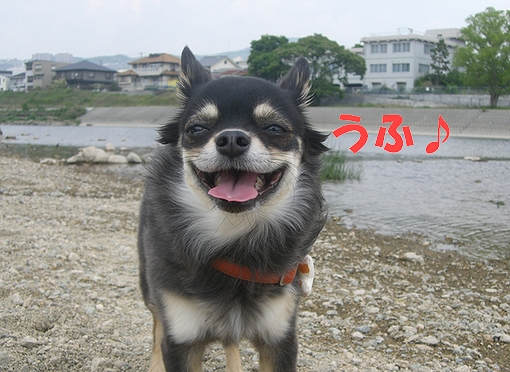 Hana_05186