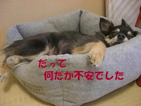 Hana_0611_2