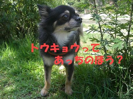 Hana_0722_2