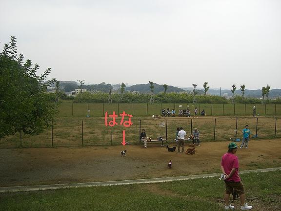 Hana0810061